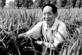 袁隆平院士逝世,享年91岁,致敬怀念袁隆平院士