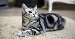 这才是真正的兼职猫,一本正经的兼职赚钱