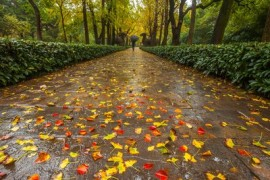 秋雨,有着不一样的感觉