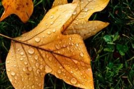 秋天的味道,秋天的美文感悟